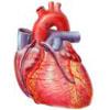 Bypass Herz Koronararterie Aorta