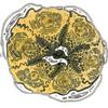 Bauchspeicheldruese Acinus