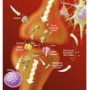 Synaptische Uebertragung Glutamat Rezeptoren