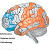 Gehirn Rindenfelder