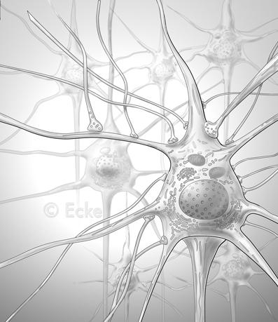 Nervengewebe 1 - Medizinische & Wissenschaftliche Illustration ...