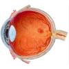 Augenquerschnitt