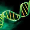 DNS DNA