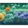 Immunreaktion B-Zellen Antikoerper