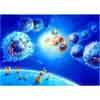 Immunantwort Makrophagen T-Zellen Membranmolekuele