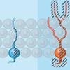 stemcell dopamin serotonin synuclein