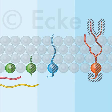 stemcell dopamin serotonin synuclein medizinische wissenschaftliche illustration julius ecke. Black Bedroom Furniture Sets. Home Design Ideas