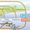 Kohlenstoffkreislauf CO2